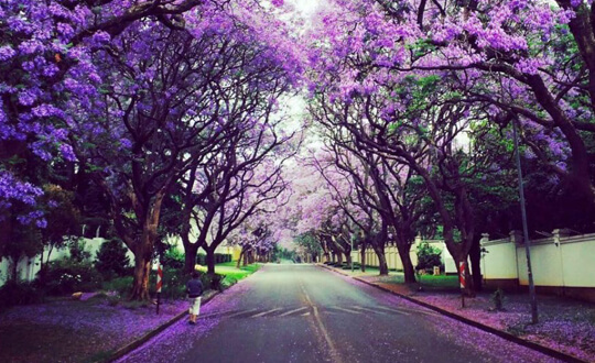 Best time of year to visit Johannesburg